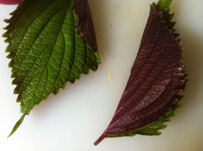 Perilla Leaves | Cooking with a Wallflower