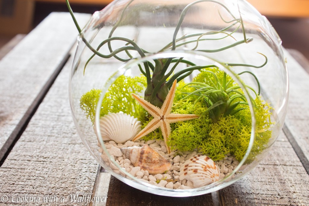 Seaside Air Plant Terrarium | Cooking with a Wallflower