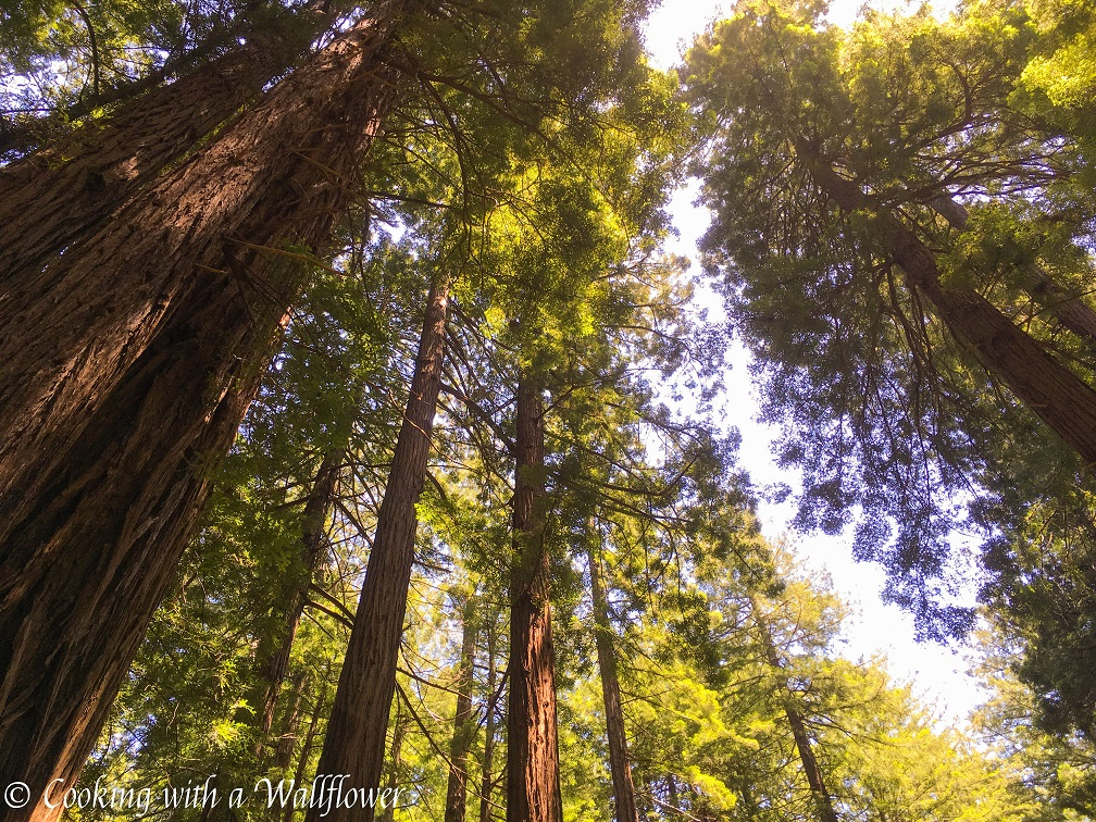 Destination - Muir Woods | Cooking with a Wallflower