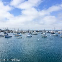 Destination: Monterey | Cooking with a Wallflower