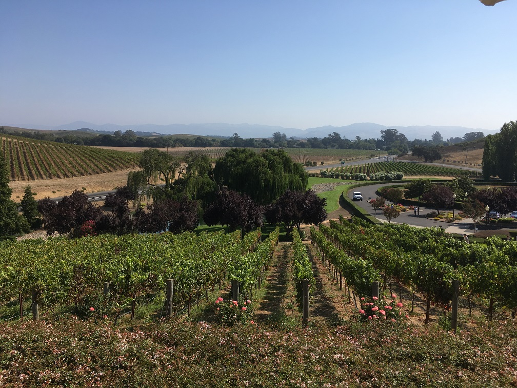 Napa Valley   Cooking with a Wallflower