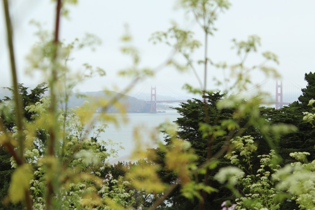 Golden Gate Bridge and Wildflowers 2